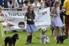 Wilmslow Community Show's ever popular Dog Show returns