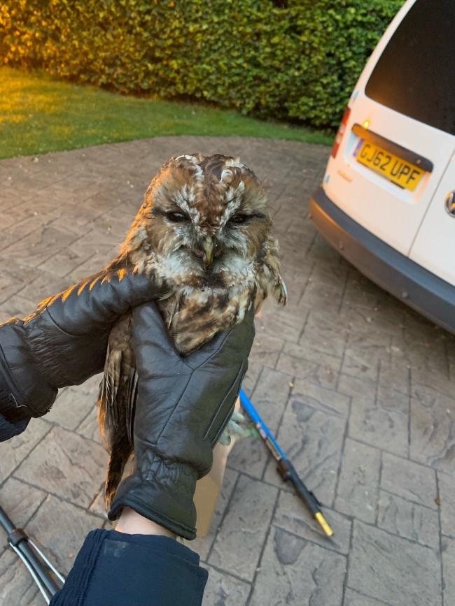 Sooty the owl trapped in the chimney of a house in Knutsford is now safe and well