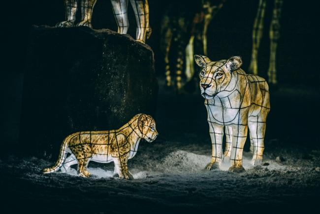 Tickets are now on sale for this year's The Lanterns event at Chester Zoo