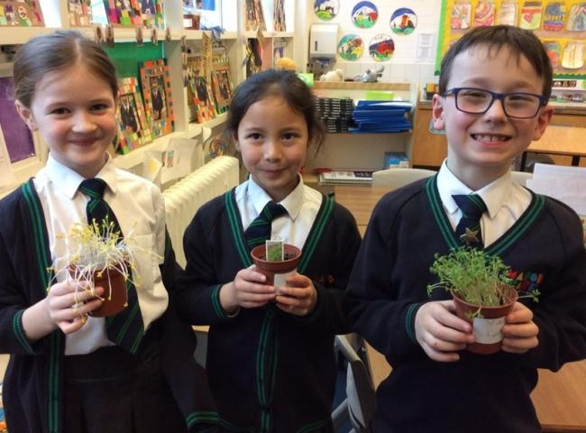 Pupils show off their plants