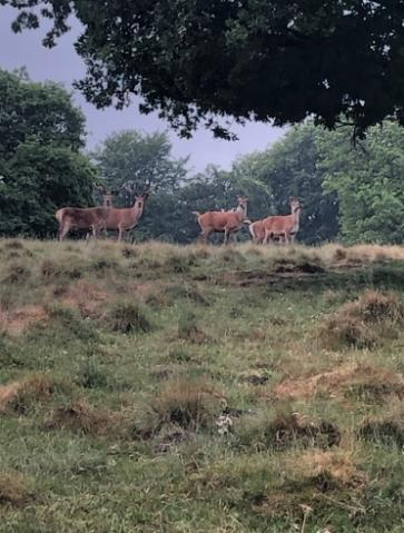 A picture sent in by a reader at Tatton Park yesterday