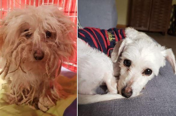 Knutsford Guardian: Coco before after she was rescued