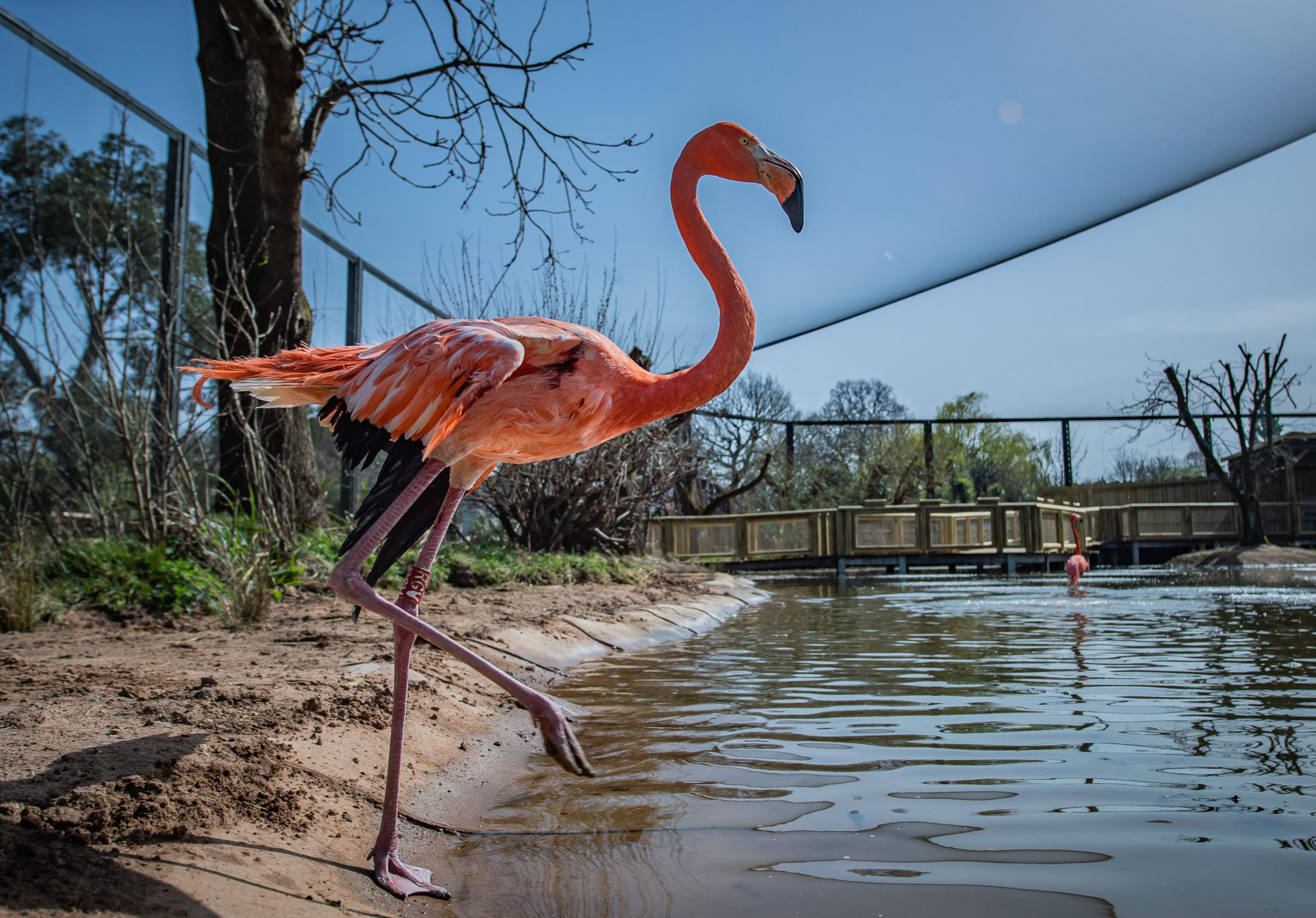 The new Latin American wetland aviary at Chester Zoo.