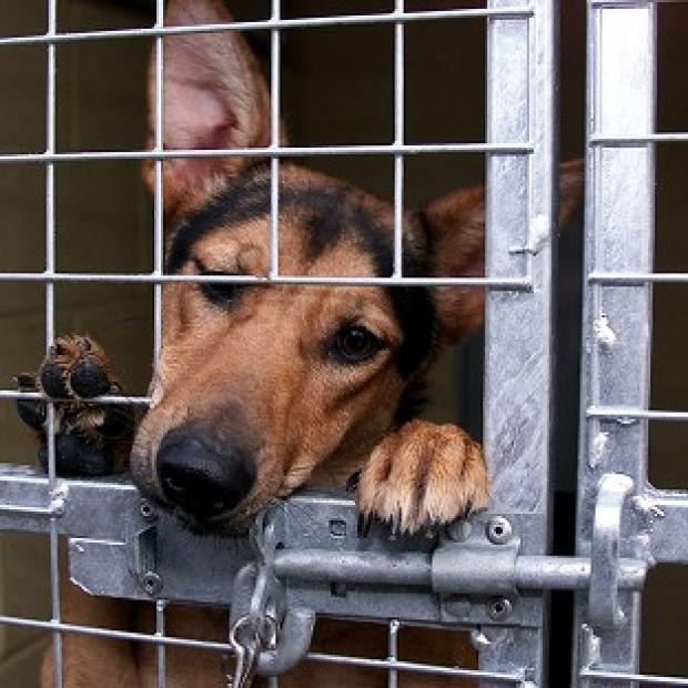 There are fear stary pets could end up in animal testing laboratories