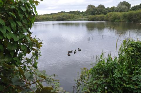 The Moor Pool in Knutsford