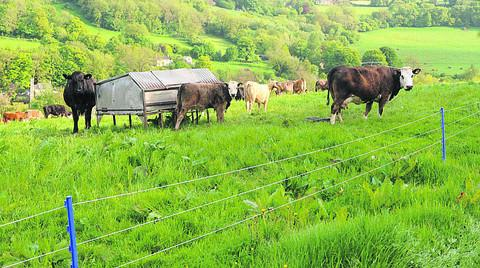 Rural Watch warning after electric fence theft