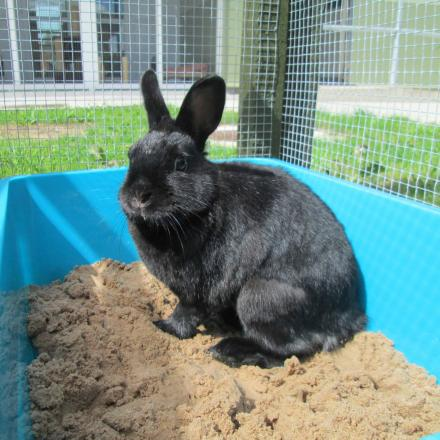 Action group set up to help rabbits