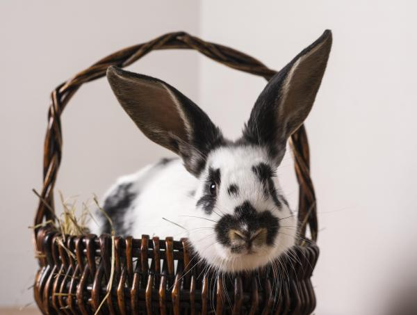 Hop down to Pets at Home to learn about rabbit care