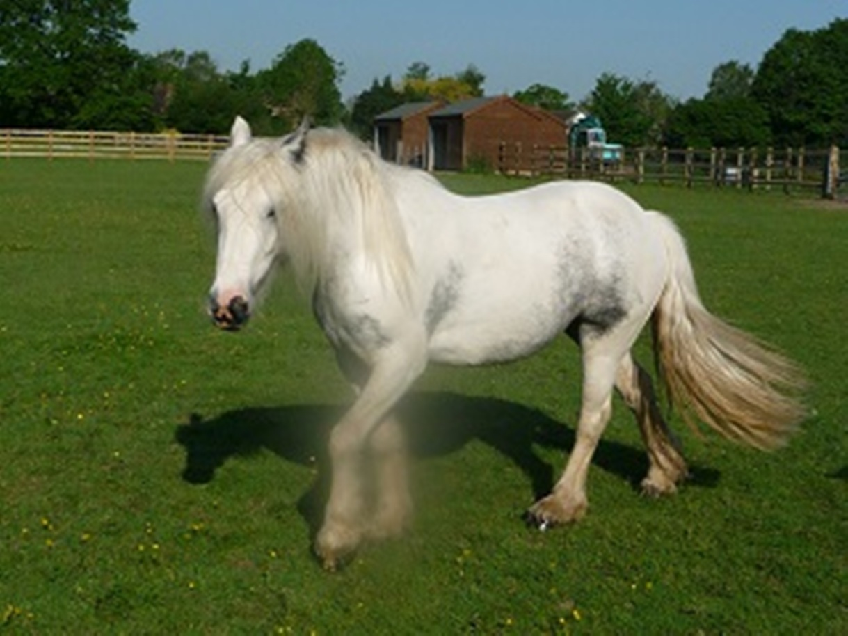 RSPCA say abandoned horses are on the increase