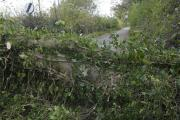Fallen trees lead to road closures