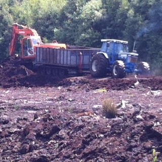 Peat extraction on Lindow Moss