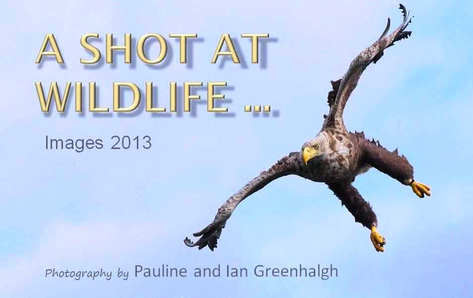 "Wirral Bird Club - ""A Shot at Wildlife 2013"" - Pauline and Ian Greenhalgh"