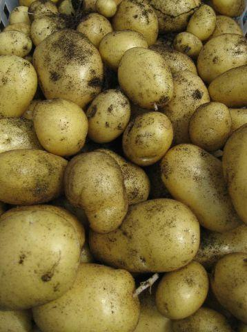 Knutsford Guardian: Fixed prices: Charging customers too much for potatoes could land you in court SUBMITTED spuds-may-02