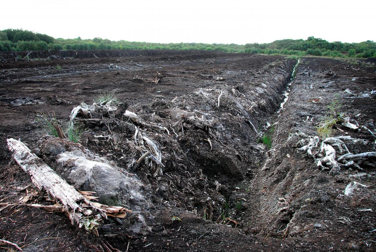 Peat extraction could end at Lindow Moss if plans for 14 homes are approved