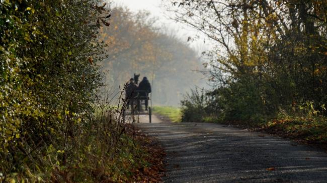 Horse and cart will be as good a way as any to get around Cheshire in the future