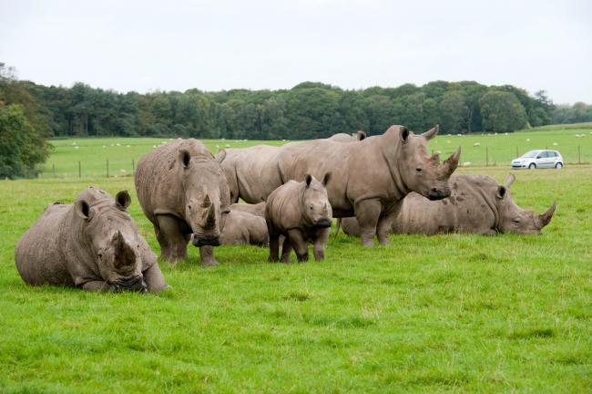 Dads can visit Knowsley Safari Park for free this Father's Day
